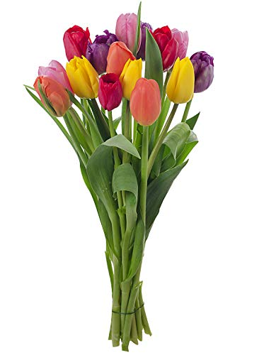Stargazer Barn - Happy Bouquet - 15 Stems of Fresh Tulips in Rainbow Assortment - No Vase, ()