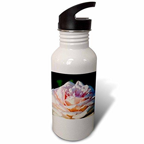 3dRose Alexis Photography - Flowers Rose - Closeup view of a sunlit beige rose flower, dark green backdrop - Flip Straw 21oz Water Bottle (wb_273115_2)
