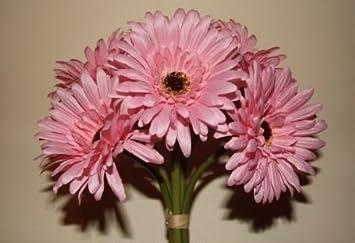 Strauss Mit 6 Rosa Gerbera Stielen Ideal Als Hochzeit Blumen G95