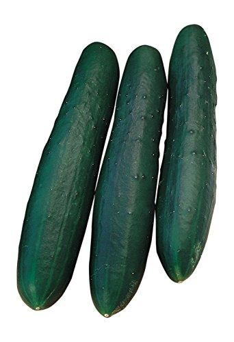 Burpee Marketmore 76 Slicing Cucumber Seeds 125 seeds