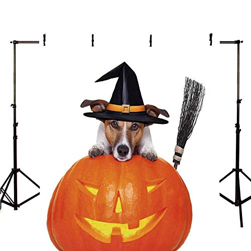 Halloween Stylish Backdrop,Witch Dog with a Broomstick on Large Pumpkin Fun Humorous Hilarious Animal Print for Photography,70.8