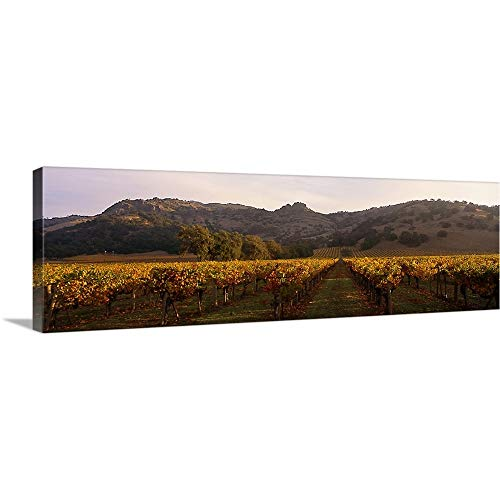 Stags Leap Napa - Canvas on Demand Premium Thick-Wrap Canvas Wall Art Print entitled Stag's Leap Wine Cellars Napa Winecountry CA 60