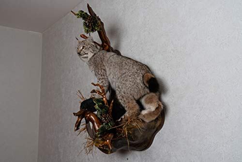 Hiking Squirrel Professional Taxidermy Mounted Animal Statue Home /&Office Gift