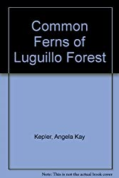 Common Ferns of Luguillo Forest