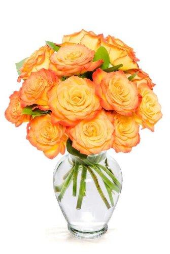12-Long-Stem-Orange-Roses