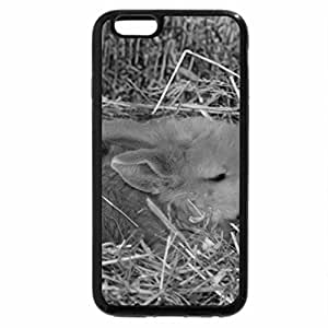 iPhone 6S Case, iPhone 6 Case (Black & White) - Baby bloomer rose
