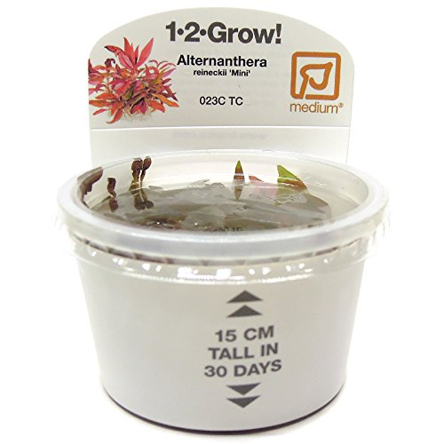 Tropica Alternanthera reineckii 'Mini' Live Aquarium Plant - In Vitro Tissue Culture (Grow Aquarium Plants)
