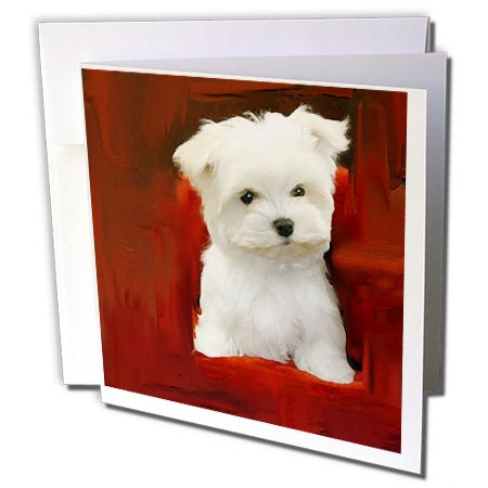 3dRose Maltese Puppy - Greeting Cards, 6 x 6 inches, set of 12 (gc_4219_2) (Maltese Note Cards)