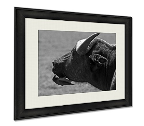 Ashley Framed Prints Close Up Of An African Buffalo Face With A Small Oxpecker Perched On Its Chin, Wall Art Home Decoration, Black/White, 26x30 (frame size), AG6338362 by Ashley Framed Prints