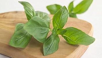 Pinkdose® Herb Seeds Home Depot - Semillas de limón y albahaca - Spice Of Africa