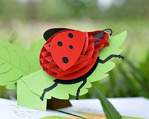 CUTPOPUP's Ladybug 3D Pop-up Greeting Card - Perfect Design with Intricate Details, Bright and Natural Colors, Idea Writing Surface for Messages, Great Gift Choice for Birthday, Annivesary or any Oc ()