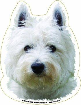 West Highland White Terrier - Highland Magnet Terrier West