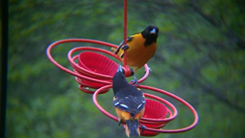 Paulson Products Spiral Bird Feeder 2 Cell for Orioles & a Variety or Different Birds Using Oranges, Jelly & Seed for Year Around use Made of Powder Coated hi-tensile Steel