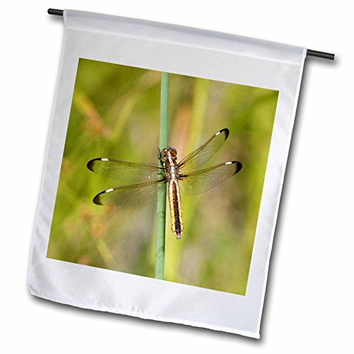 3dRose Danita Delimont - Insects - Spangled Skimmer female in wetland Washington County, Missouri - 18 x 27 inch Garden Flag (fl_278996_2) (Streamer Gossamer)