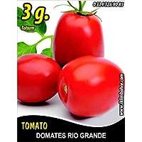 Domates Tohumu Rio Grande - 3 g (~ Takribi 750 Tohum)