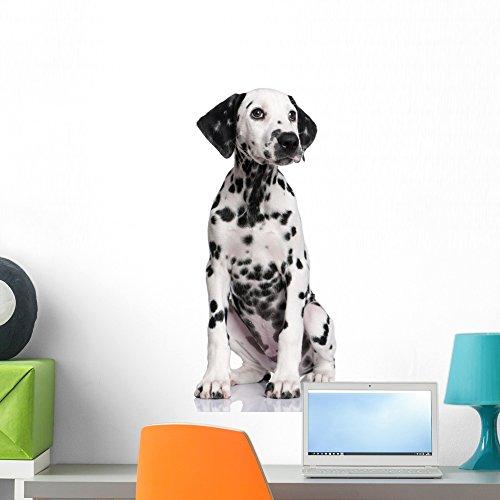 Wallmonkeys FOT999628 Dalmatian Puppy Dog Wall Decal, 24