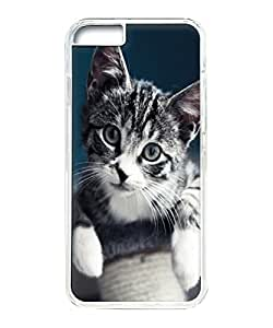 VUTTOO Iphone 6 Plus Case, Cute Gray Kitten Portrait Hardshell Case for Apple Iphone 6 Plus 5.5 Inch PC Transparent