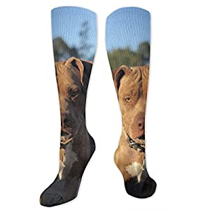 American Pitbull Terrier Colby Line Polyester Cotton Over Knee Leg High Socks Funny Unisex Thigh Stockings Cosplay Boot Long Tube Socks for Sports Gym Yoga Hiking Cycling Running Travel 27