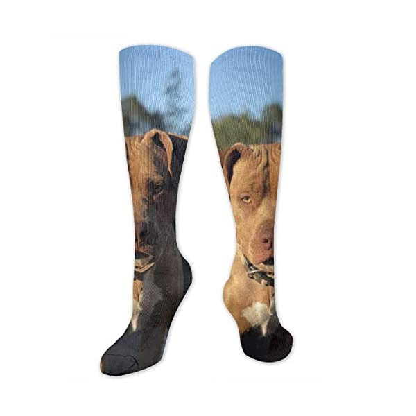 American Pitbull Terrier Colby Line Polyester Cotton Over Knee Leg High Socks Funny Unisex Thigh Stockings Cosplay Boot Long Tube Socks for Sports Gym Yoga Hiking Cycling Running Travel 1