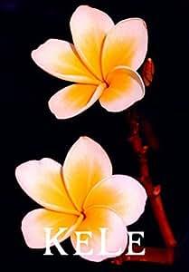 Nuevas semillas frescas! 20PCS / BAG Plumeria Semillas, semillas de flor exótica raras semillas de flor de huevo
