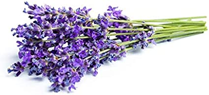 1000 Lavender Seeds