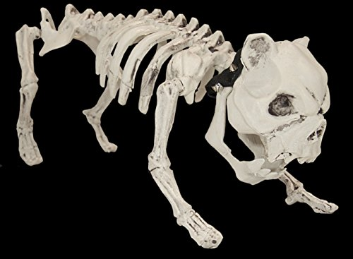 Halloween Haunt 17 Inch Plastic Skeleton Dog Bulldog Figure on Leash Graveyard Halloween Decoration