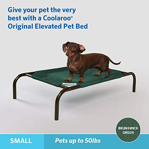 The Original Elevated Pet Bed by Coolaroo, Small, Brunswick Green
