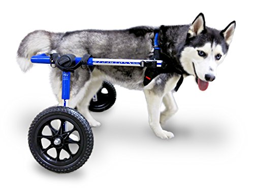 Dog Wheelchair - For Med/Lg Dogs 51-69 lbs - Veterinarian Approved - Wheelchair for Back Legs - By Walkin' Wheels