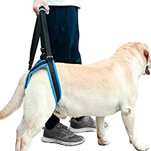 Albabara Pet Dog Support Harness Rear Lifting Harness Veterinarian Approved for Old K9 Helps with Poor Stability, Joint… Click on image for further info.