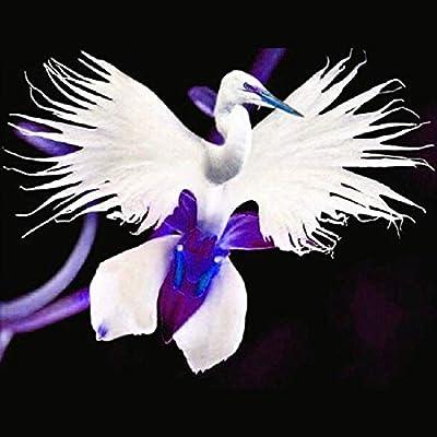 Portal Cool 50Pcs Japanese Radiata White Dove Egret Orchid Seeds Beautiful Bird Shape Flower : Garden & Outdoor