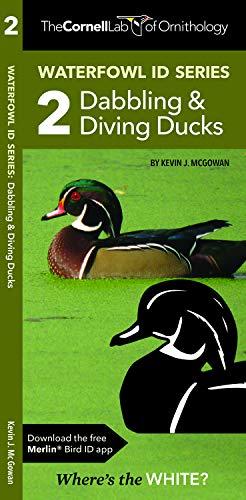 Waterfowl ID Series: 2 Dabbling & Diving Ducks (Wildlife and Nature - Ducks Waterfowl