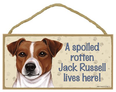 (Jack Russell Terrier- A spoiled