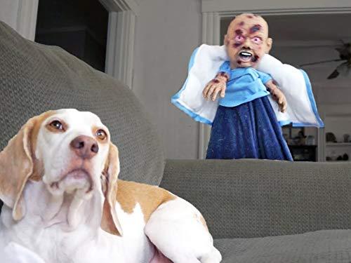 Funny Dogs vs Zombie Prank