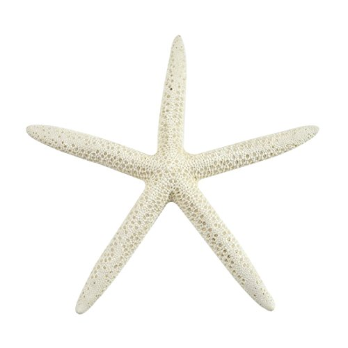 Starfish, 15 Large White Finger (Pencil) Starfish 6-8