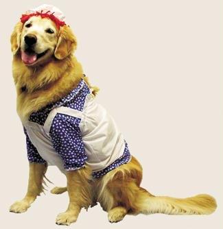 Pet Raggedy Ann Dog Costume For Medium Dogs -