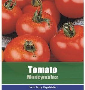 2 PACKS of TOMATO Moneymaker FRUIT Garden SEEDS