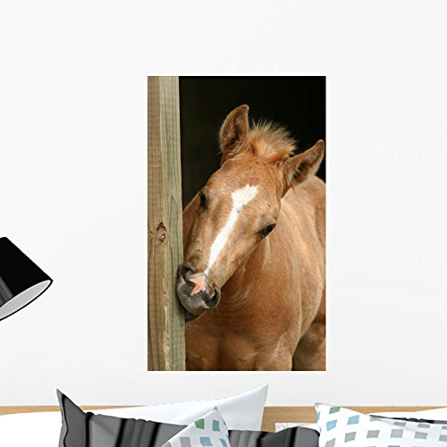 Wallmonkeys Foal Gnawing Wood Wall Decal Peel and Stick Graphic WM12335 (24 in H x 15 in W) ()