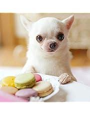 Diy 5D Diamant Schilderij - Chihuahua hond Diamond Painting Kits 40x40cm - Cross Stitch Rhinestone Embroidery Art Crafts voor Home Wall Decor Volwassenen en kinderen