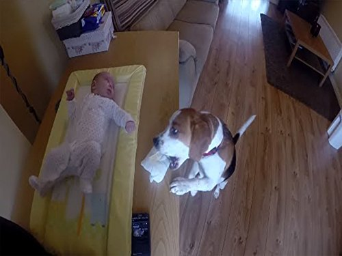 Cute Dog Helps Change Baby's Diaper