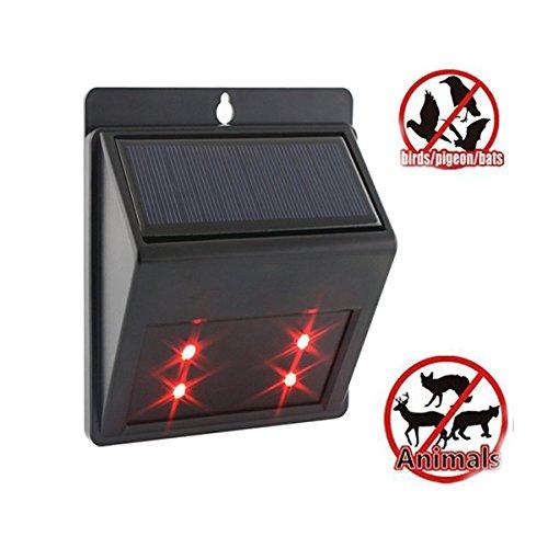 Chicken Coop Solar Powered Lighting - 4