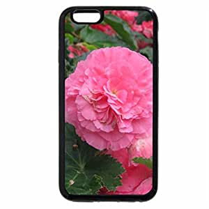 iPhone 6S Plus Case, iPhone 6 Plus Case, Pink Begonia