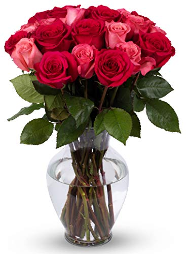 Benchmark Bouquets 2 Dozen Blushing Beauty Roses, With Vase (Fresh Cut Flowers) ()