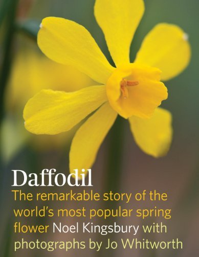 Daffodil: The remarkable story of the world's most popular spring flower by Timber Press