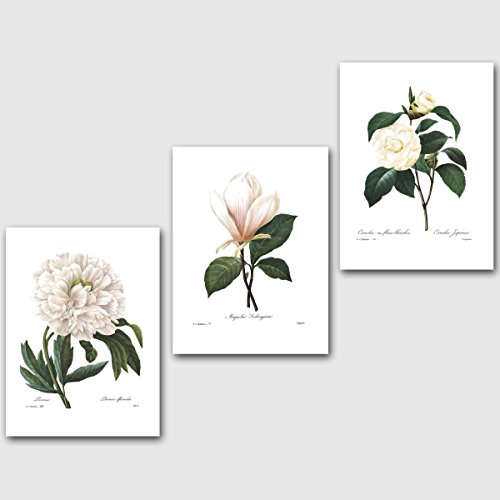 Set of 3 Botanical Prints, White Decor (Redoute Flower Wall Art) Peony Magnolia Camellia -- Unframed