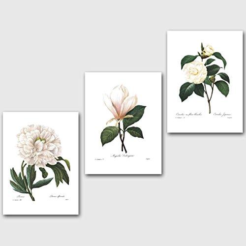 Set of 3 Botanical Prints, White Decor (Redoute Flower Wall Art) Peony Magnolia Camellia -- Unframed - Popular White Flowers