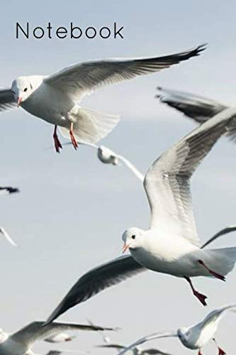 Notebook: Seagull Gannet Birdwatcher Homework Book Notepad Notebook Composition and Journal Gratitude Diary Gift Present
