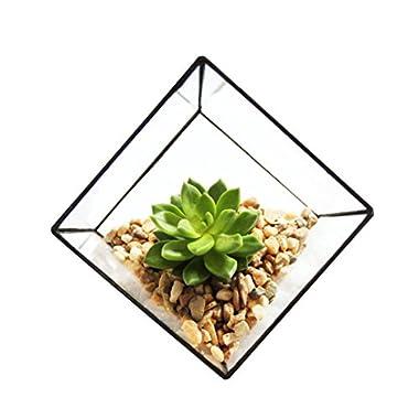 Cube Shaped Succulent Pyramid Tabletop Succulent Plant Terrarium Box