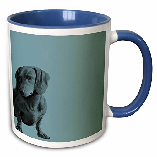 3dRose (mug_130560_6) Adorable Daschund Dog pets animals - Two Tone Blue Mug, 11oz