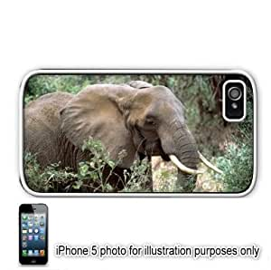African Elephant Photo Apple iPhone 5 Hard Back Case Cover Skin White