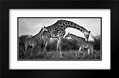 Giraffe Family 40x22 Black Modern Frame and Double Matted Art Print by Ortega, Xavier